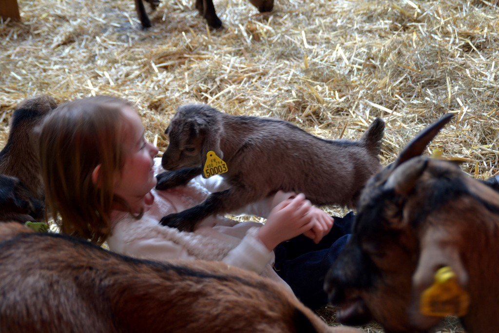 Moments partagés entre enfant et animal